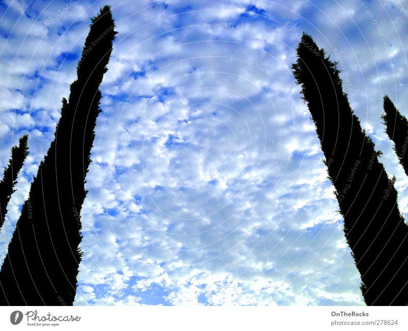 Toskanische Wolken Umwelt Natur Luft Himmel nur Himmel Gewitterwolken Schönes Wetter Sturm Baum Ferne Unendlichkeit hoch schön natürlich blau weiß friedlich