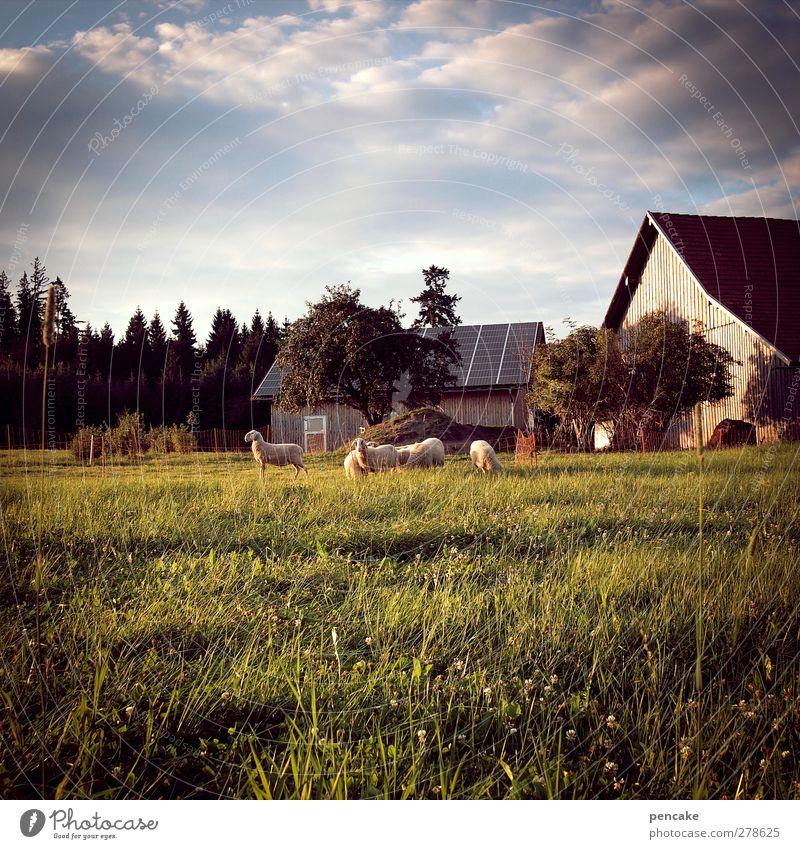 obacht im ländle Natur Sommer Tier Landschaft Erholung Haus Wiese Berge u. Gebirge Wärme Glück Garten Stimmung Feld Zufriedenheit Tiergruppe Alpen