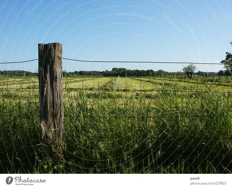 Frühlingswiese Himmel Sonne grün blau Wiese Gras Horizont Rasen Zaun Draht Pfosten
