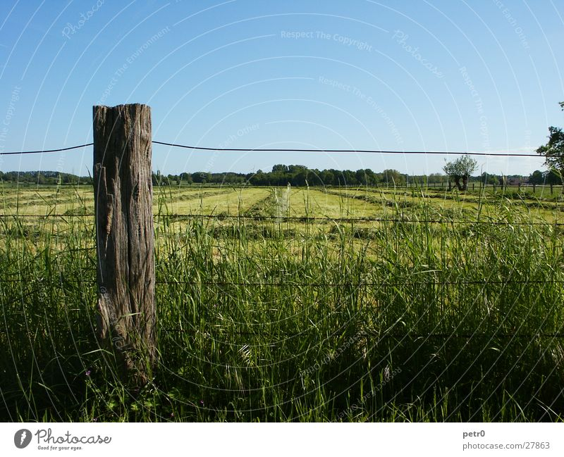 Frühlingswiese Wiese Horizont Draht Zaun Gras Rasen grün Pfosten Himmel blau Sonne