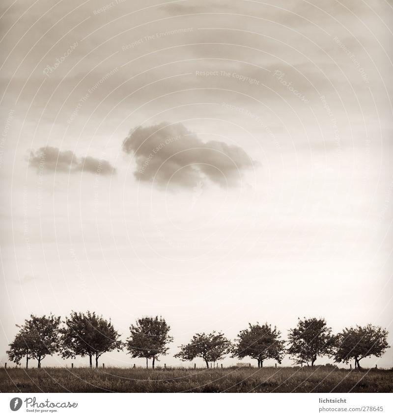 Randgruppe Natur Landschaft Himmel Wolken Sommer Herbst Wetter Schönes Wetter Baum Wiese Feld Stadtrand Wege & Pfade wandern Idylle Baumreihe 7 Reihe Fußweg