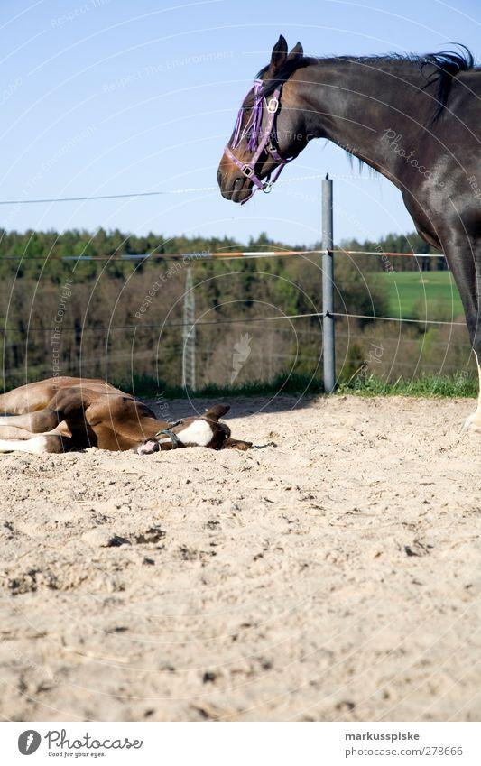 pferd mit fohlen Natur Tier Landschaft feminin Sand träumen warten beobachten Pferd Weide Nervosität Reitsport Reiten Reiter Pferdekopf Pferdeschwanz