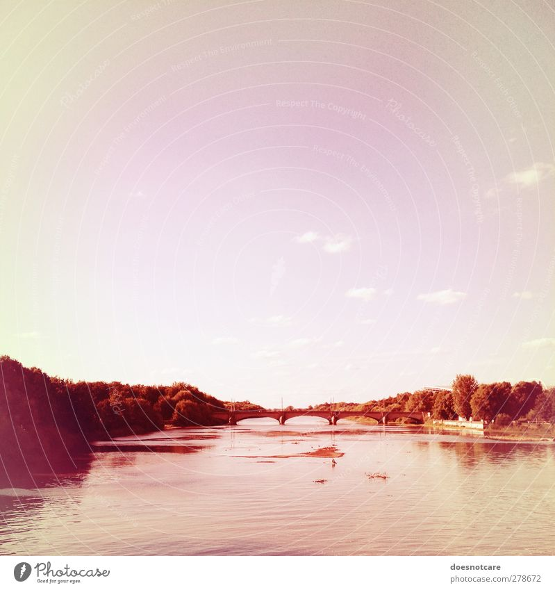 Ode to LE. Himmel Natur Wald Umwelt Park rosa Brücke Fluss Leipzig bleich Elster Luppe Aue NP