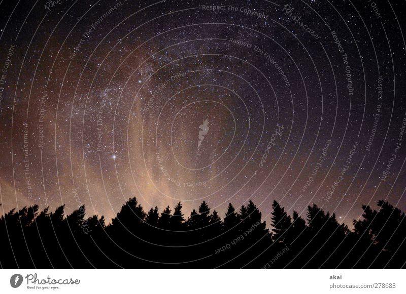 Black Night? Natur Landschaft Pflanze Himmel Nachthimmel Sommer Baum Wald dunkel orange schwarz Ewigkeit milchstrasse Galaxie Wolken Weltall Farbfoto