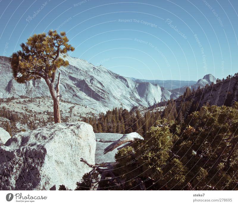 Yosemite Landschaft Wolkenloser Himmel Sommer Baum Sträucher Felsen Berge u. Gebirge Gipfel blau grau grün Natur Yosemite NP Granit Gedeckte Farben