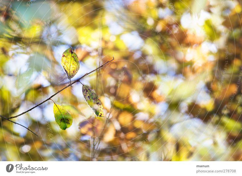 herbstlich Natur Herbst Baum Sträucher Blatt Herbstfärbung Herbstbeginn mehrfarbig Farbfoto Außenaufnahme Menschenleer Textfreiraum rechts Tag Kontrast