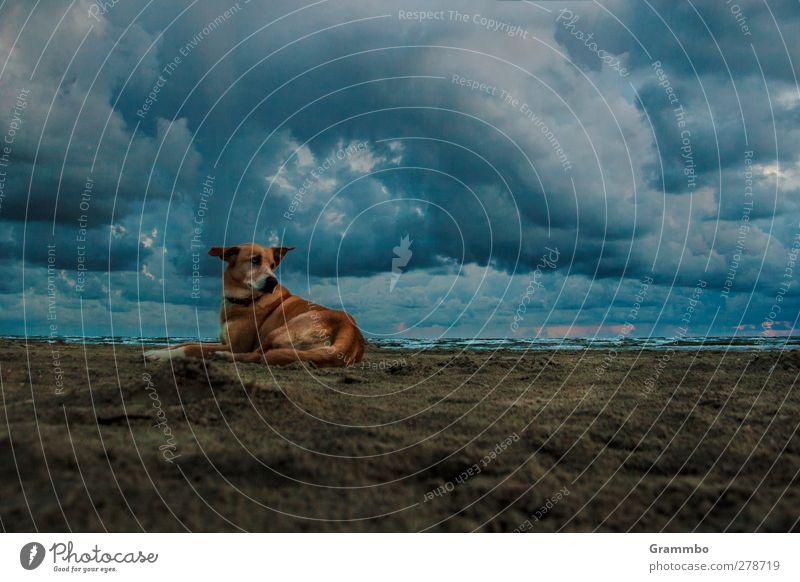 Lilli sucht die Sonne Hund Himmel Wasser Sommer Meer Strand Tier Wolken ruhig Erholung Herbst Küste Freiheit Sand Luft liegen