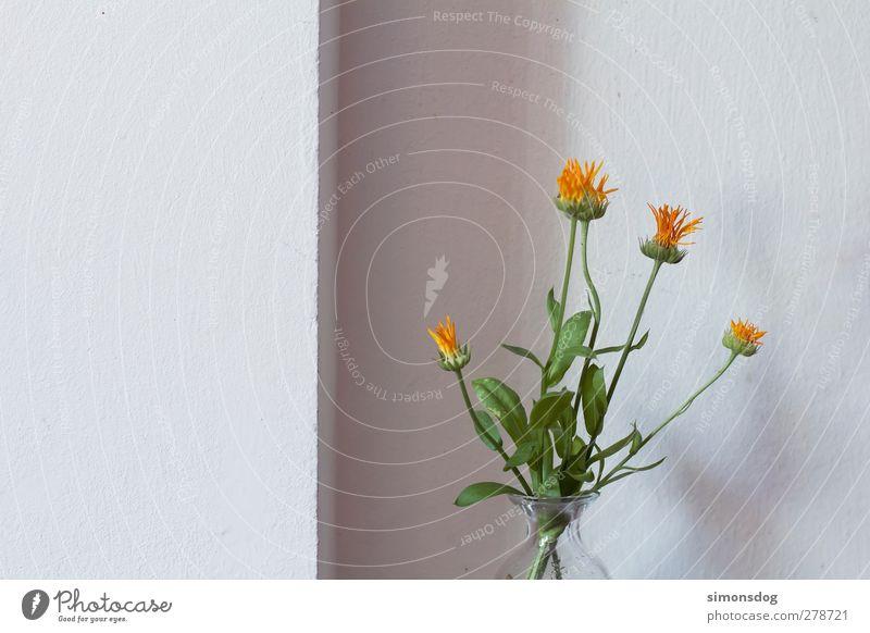 1/3 blank Natur Pflanze Blume Blüte Mauer Wand Fassade Blühend Duft hell kalt weiß Dekoration & Verzierung Blumenstrauß Blumenvase gestrichen trist neutral