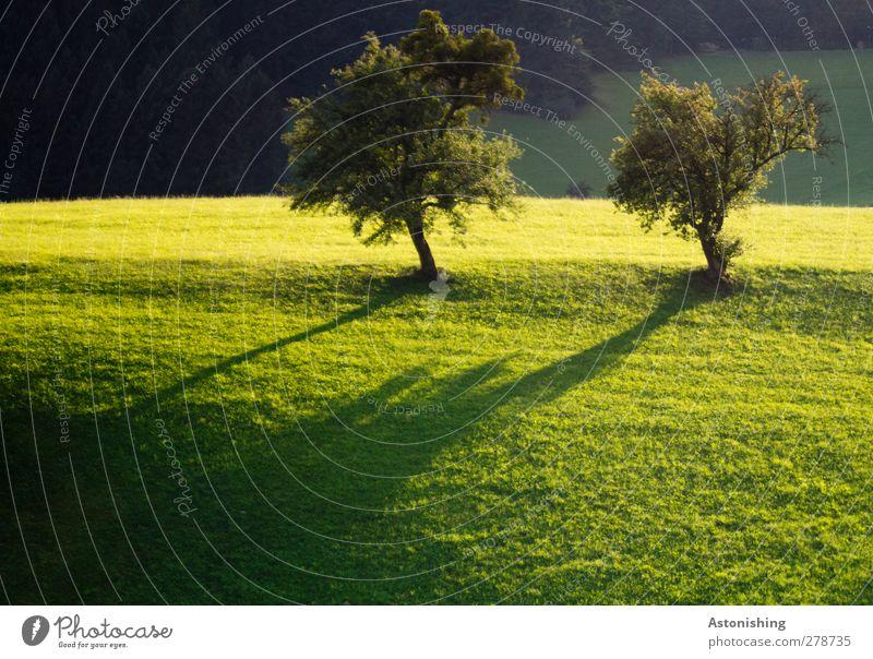 zwei Bäume Umwelt Natur Landschaft Pflanze Erde Sonne Sommer Schönes Wetter Wärme Baum Gras Wiese Wald Hügel gelb grün schwarz 2 Blatt Baumkrone lange schatten