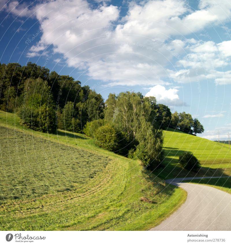 kurve Umwelt Natur Landschaft Pflanze Himmel Wolken Sommer Wetter Schönes Wetter Wärme Baum Gras Sträucher Wiese Wald Hügel Verkehr Straßenverkehr blau