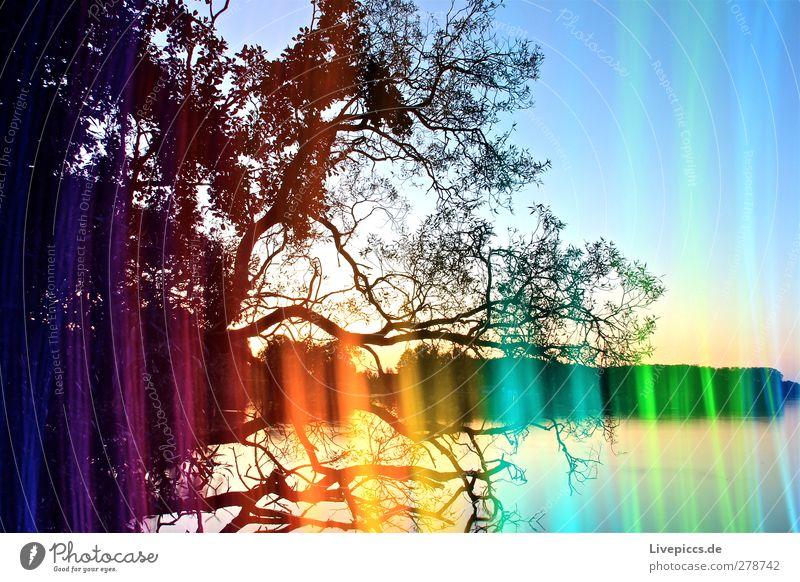 Farben der Müritz 2 Himmel Natur blau Wasser grün Sommer Baum Pflanze Sonne Blatt Landschaft gelb Umwelt Küste See Kunst