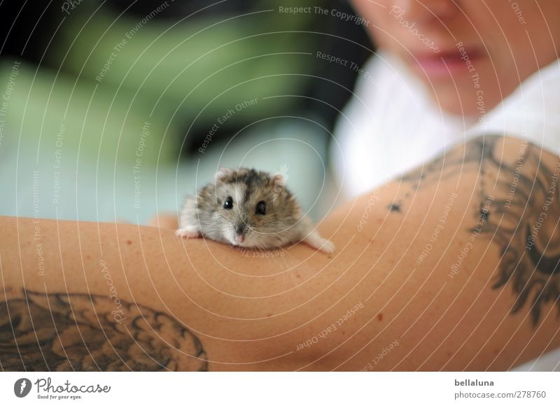Karli | Schatzsucher Mensch feminin Junge Frau Jugendliche Erwachsene Leben Haut Nase Mund Lippen Arme 1 18-30 Jahre Tier Haustier Tiergesicht Fell Pfote sitzen