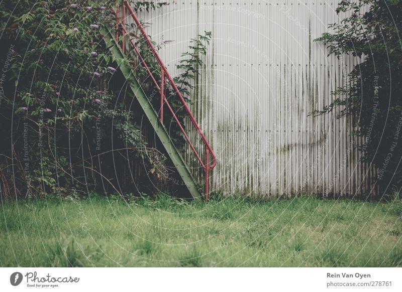 Überwachsene Treppe Umwelt Natur Menschenleer Mauer Wand Abenteuer Rost Gras desolat alt rot grün Lagerhalle Leiter Farbfoto Außenaufnahme Zentralperspektive