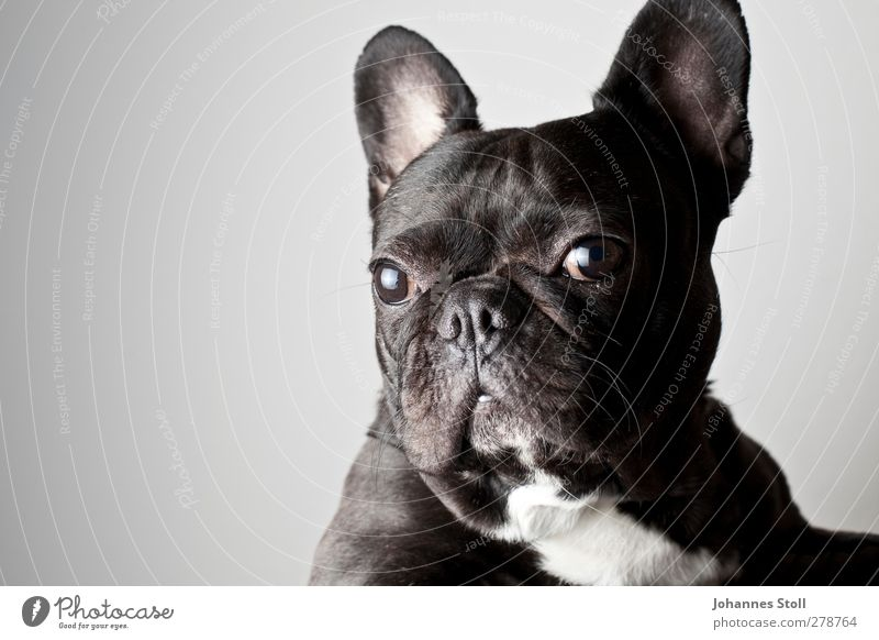 Hundeaugen Hund Tier Zukunft Vergänglichkeit Fell Tiergesicht Gelassenheit Haustier