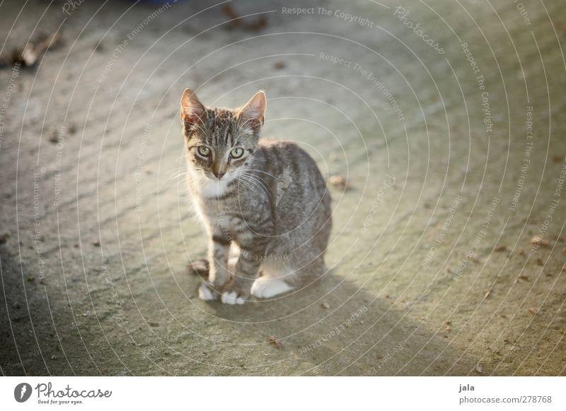 mauz Katze Tier sitzen Haustier
