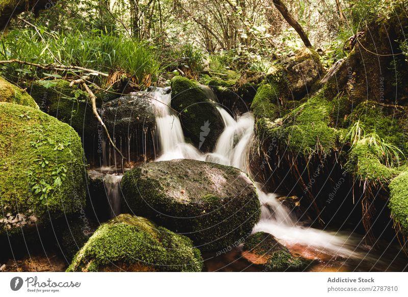 Kleiner Wasserfall zwischen den Steinen im Wald Fluss Felsen Gras Baum grün Entwurf Aussicht nass Pflanze Natur strömen Ferien & Urlaub & Reisen natürlich