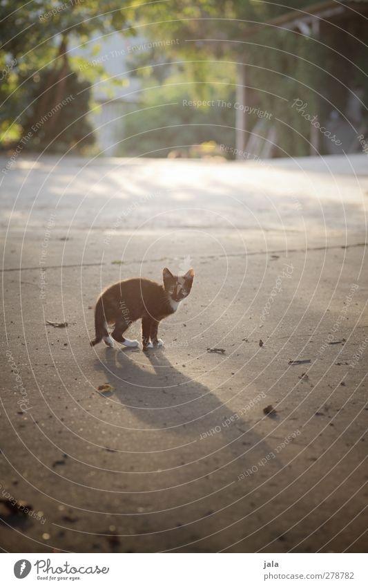 noch ne mauz Katze Pflanze Tier Tierjunges Haustier