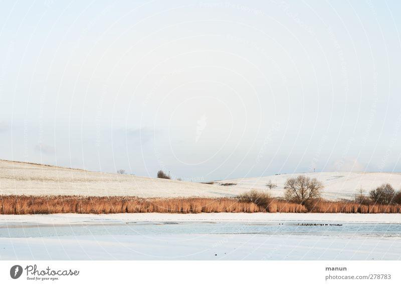 Eiszeit Natur Landschaft Erde Sonnenlicht Winter Frost Schnee Baum Sträucher Wiese Feld Seeufer Ostalbkreis Schwäbische Alb kalt Wintertag Farbfoto