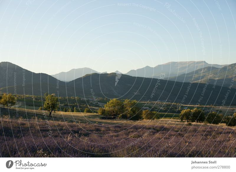 Provence Natur Ferien & Urlaub & Reisen schön Sommer Pflanze Freude Farbe Erholung Landschaft Berge u. Gebirge Freiheit Feld Schönes Wetter Sträucher Hügel violett