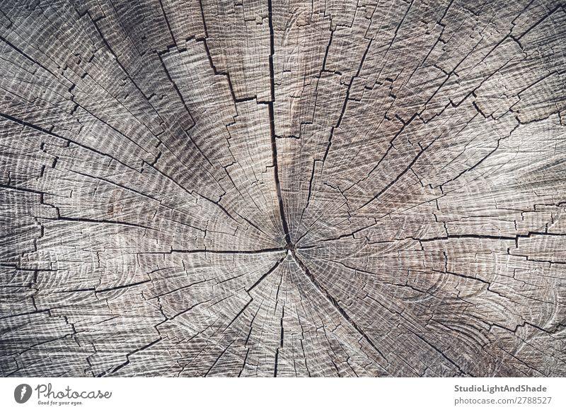 Querschnitt durch einen alten Baum Natur Holz natürlich braun Farbe geschnitten Hintergrund Konsistenz Ringe Stumpf Kofferraum Totholz Strahl Forstwirtschaft