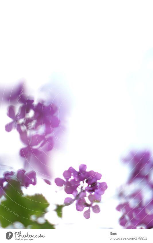 ein Hauch Sommer grün Pflanze Blume violett