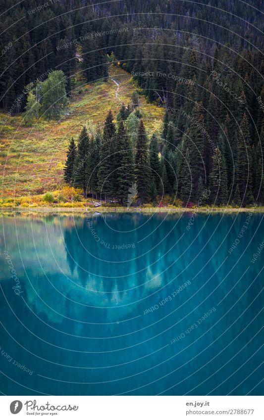 Smaragd Ferien & Urlaub & Reisen Ausflug Natur Landschaft Herbst Wiese Wald Hügel Seeufer Emerald Lake türkis Idylle Tourismus Gebirgssee Kanada Nordamerika
