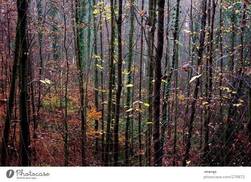 Welk schön Baum Pflanze Farbe Wald Landschaft dunkel Herbst Stimmung außergewöhnlich Klima Wandel & Veränderung Klimawandel