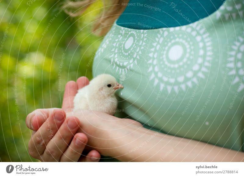 kleines Küken Mensch Natur Jugendliche Junge Frau Pflanze grün Tier Tierjunges Leben Frühling feminin Garten sitzen Beginn Sträucher niedlich