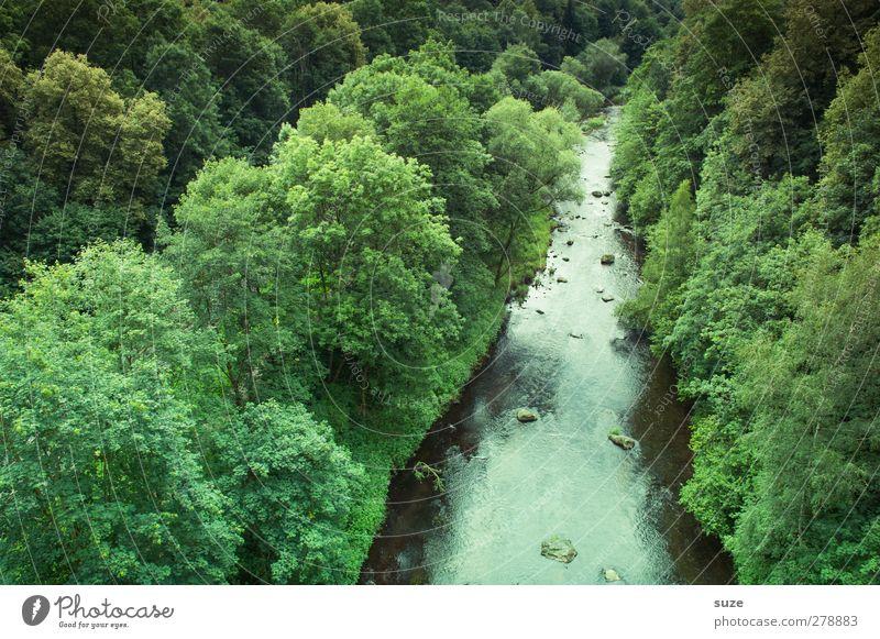 Triebtal im Vogtland Natur Wasser grün Sommer Baum Pflanze Wald Landschaft Umwelt Klima Urelemente Schönes Wetter Idylle Fluss Sachsen Tal