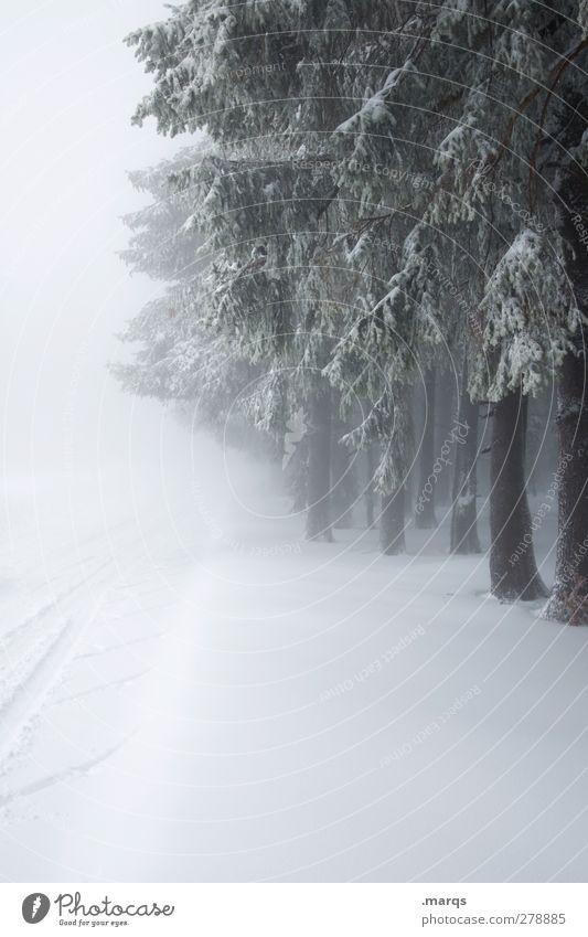 Abkühlung Natur Baum Winter Wald Landschaft Umwelt kalt Schnee Wege & Pfade Stimmung Eis Wetter Klima Nebel Frost frieren