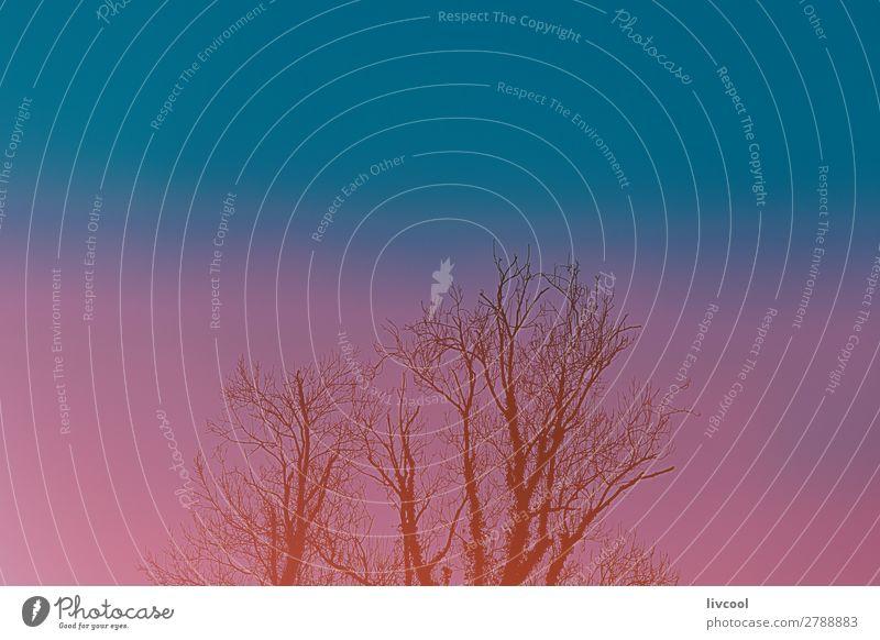 Baum im Winter Garten Natur Landschaft Pflanze Urelemente Park Hügel Stadt Straße Coolness niedlich blau Einsamkeit Ast Niederlassungen Sonnenuntergang Februar