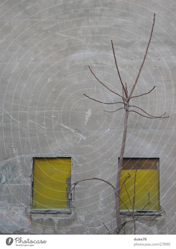 meditation Baum Winter gelb Fenster Stimmung Dinge