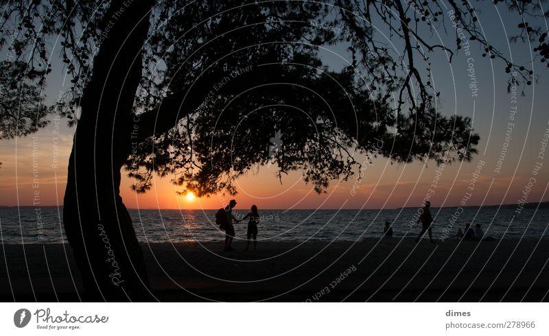Sonnenuntergang am Mittelmeer bei Zadar (Kroatien) Mensch Landschaft Wasser Himmel Horizont Sonnenaufgang Sommer Wärme Baum Küste Meer Erholung Zufriedenheit