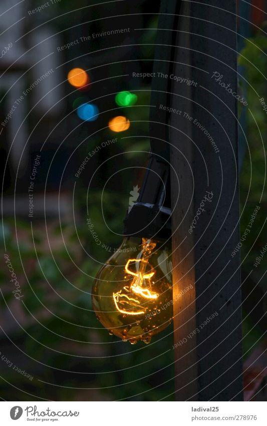 Glühwürmchen in der Glühbirne Sommer Erholung Essen Gras Lifestyle Garten Feste & Feiern Freiheit Party glänzend Häusliches Leben elegant leuchten Geburtstag Sträucher genießen
