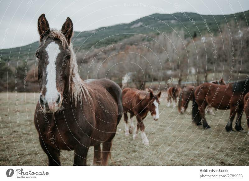 Lustige Pferde auf der Wiese weidend Pyrenäen lustig Feld Baum Hügel Wolken Himmel Berge u. Gebirge schön Säugetier Tier pferdeähnlich Mähne Stute züchten Ponys
