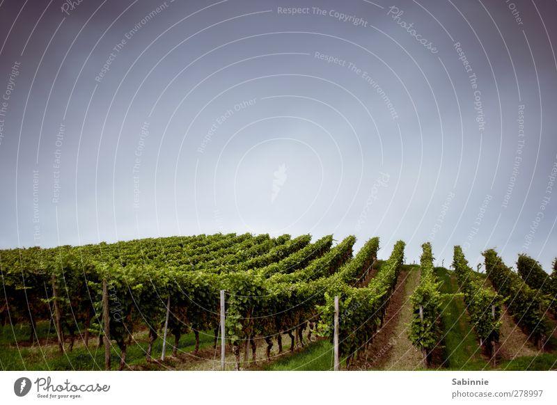 Fränkischer Weinberg Umwelt Natur Landschaft Erde Himmel Sommer Klima Schönes Wetter Pflanze Nutzpflanze Feld Hügel blau grün Weintrauben Ordnung Landwirtschaft