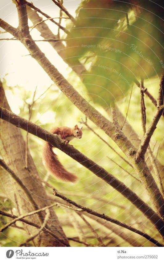 kleiner Beobachter Natur grün schön Sommer rot Tier gelb Tierjunges Garten Park gold Wildtier wild warten beobachten