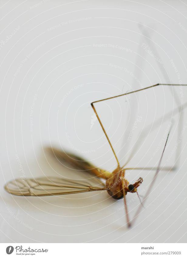 Hitzetod Tier Totes Tier Fliege 1 braun Tod Schnake Flügel Beine Insekt Ekel Farbfoto Innenaufnahme Nahaufnahme Detailaufnahme Makroaufnahme