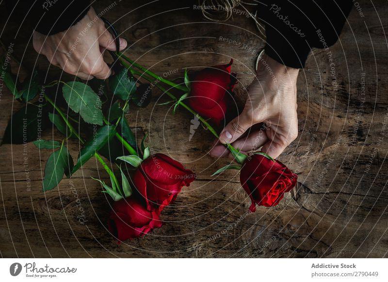 Nicht erkennbare Frau, die einen Blumenstrauß aus roten Rosen macht. Hand unkenntlich Hintergrundbild dunkel Postkarte Blütenblatt Valentinsgruß Jahrestag