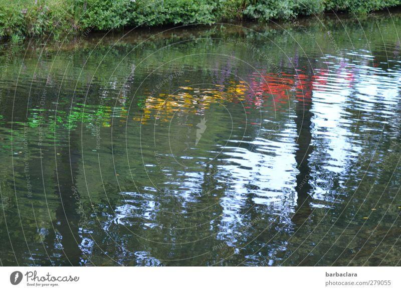 Wasserfest Veranstaltung Himmel Sommer Baum Sträucher Fluss Dekoration & Verzierung Kitsch Krimskrams Scheibe Feste & Feiern leuchten Fröhlichkeit mehrfarbig