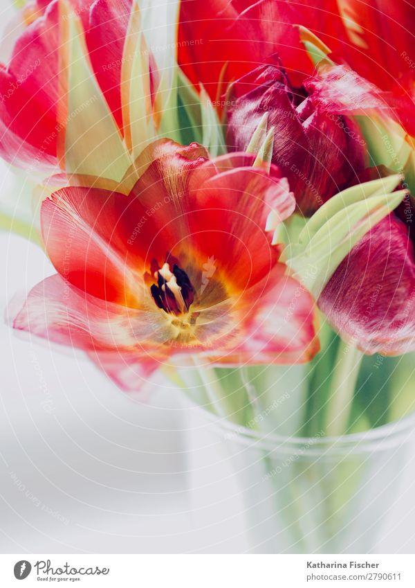Rote Blume Tulpe malerisch Blumenstrauß Natur Sommer Pflanze grün weiß rot Blatt Winter Herbst gelb Blüte Frühling Kunst orange rosa