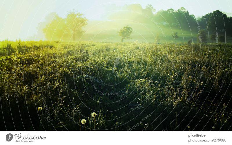 Take a walk with me Sommer Baum Erholung Landschaft ruhig Ferne Umwelt Frühling Wiese Gras natürlich Freiheit hell Nebel Idylle frei