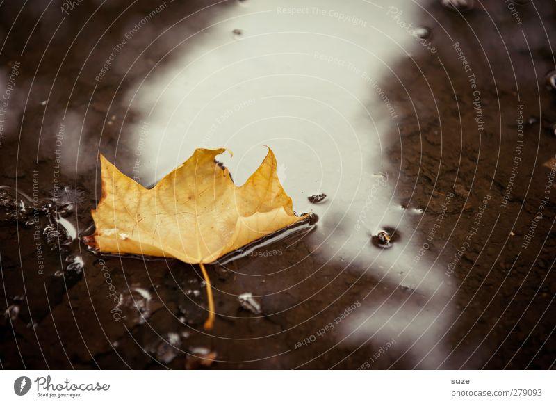 Herbstzeitloses Natur alt Wasser schön gelb Herbst Traurigkeit Zeit braun Wetter natürlich nass ästhetisch Vergänglichkeit Im Wasser treiben Jahreszeiten