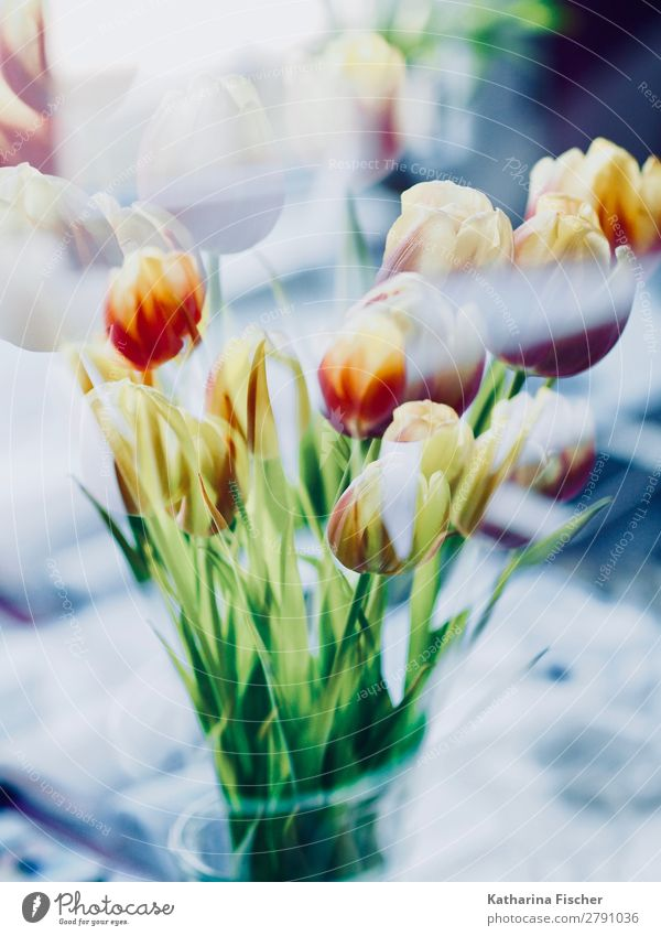 Blumen Blumenstrauß Tulpen Doppelbelichtung Natur Sommer Pflanze blau grün weiß rot Blatt Winter Herbst gelb Frühling Kunst orange rosa