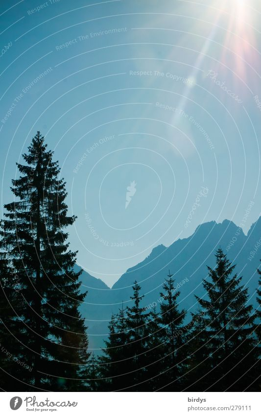 Wie im kleinen so im großen Natur Wolkenloser Himmel Sonnenlicht Sommer Tanne Nadelbaum Alpen Berge u. Gebirge Gipfel leuchten ästhetisch elegant gigantisch