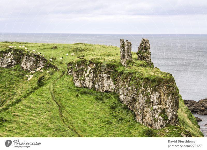 Ort der Grüntöne Ferien & Urlaub & Reisen Meer Insel Berge u. Gebirge Landschaft Himmel Wolken Pflanze Gras Moos Grünpflanze Küste gelb grau grün Horizont