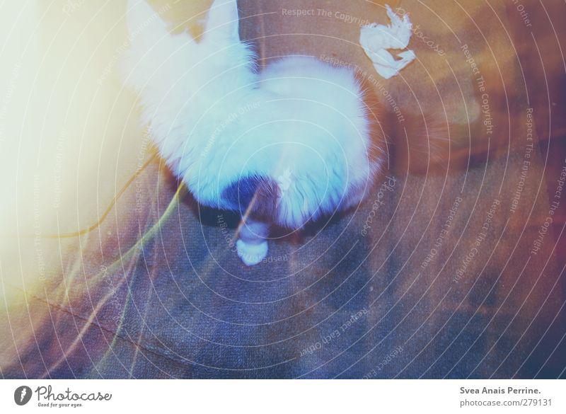 katzen trash! Tier Haustier Katze Katzenbaby 1 trashig Lichtspiel Lichterscheinung dreckig Taschentuch Fell Teppich Farbfoto Innenaufnahme Blitzlichtaufnahme