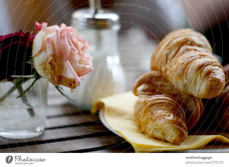 der morgen nach dem chamancinco. Blume Erholung gelb Stimmung rosa Lebensmittel Freizeit & Hobby Zufriedenheit Ernährung Tisch Lifestyle süß Idylle Rose genießen Lebensfreude