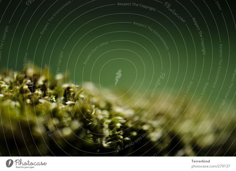 Hiddensee | einbetten.einschlafen. Natur grün Wald Leben natürlich glänzend Wachstum weich Blühend Strahlung Moos saftig knallig gedeihen