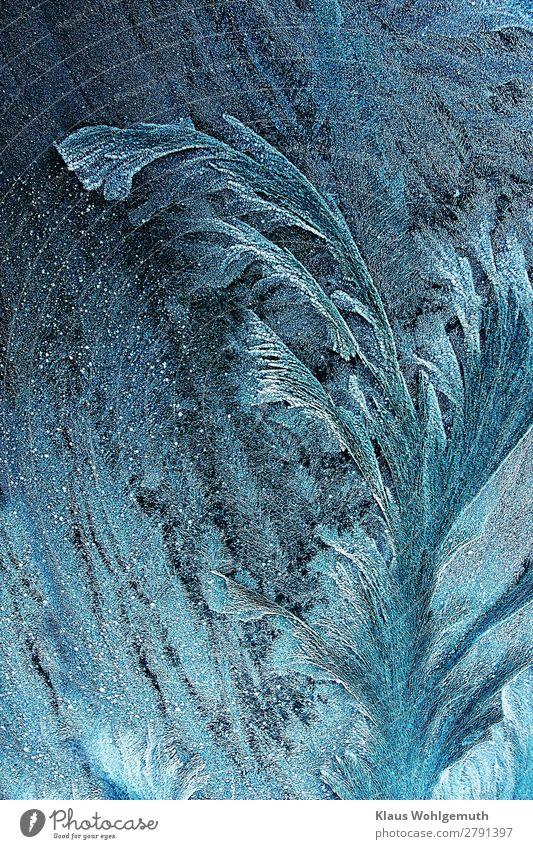 Cold beauty Natur Winter Eis Frost Pflanze Kristalle frieren glänzend blau türkis weiß schön kalt Eisblumen gefroren Farbfoto Gedeckte Farben Außenaufnahme
